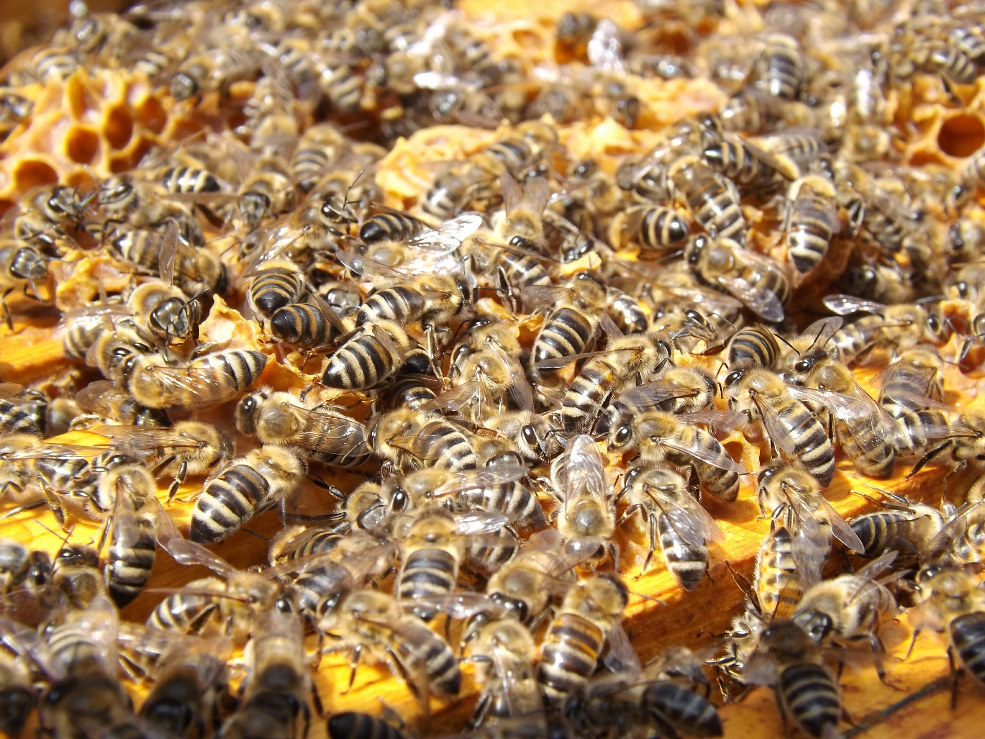 Bees.