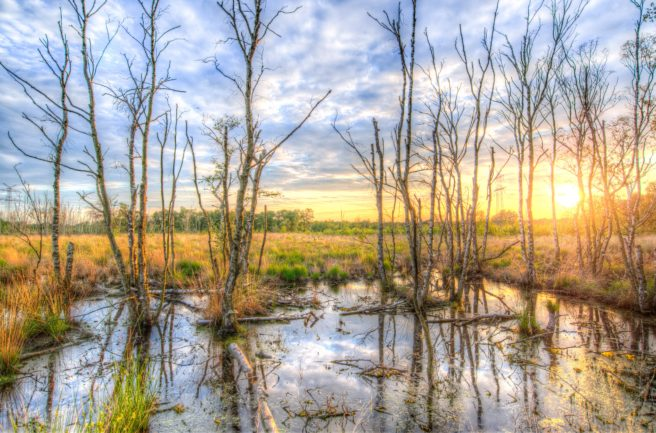A swamp.